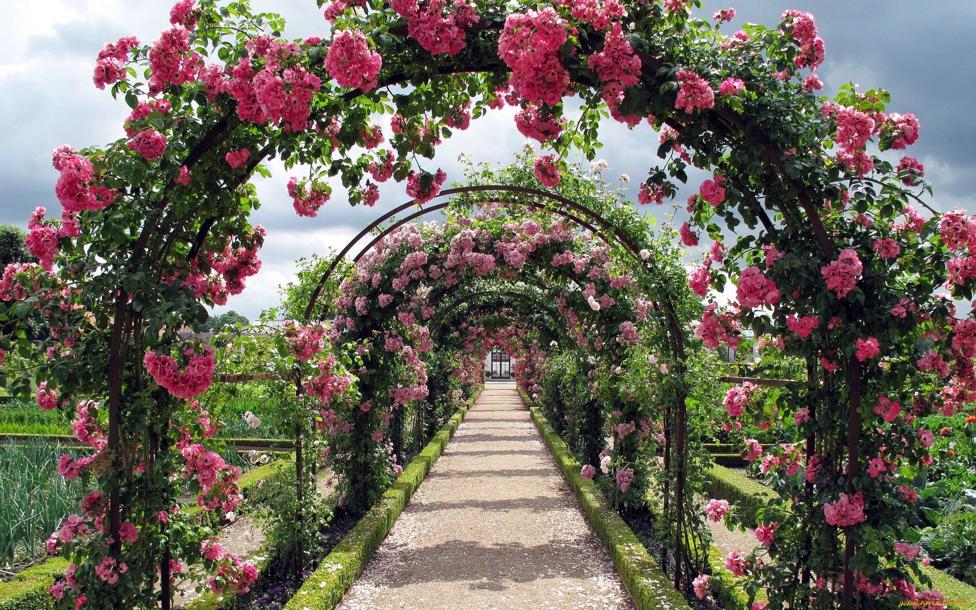 красивые розарии фото все